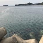 小浦港釣り座2