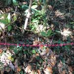 下り坂はロープが張り巡らされており、足元はぬかるんでいる。
