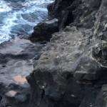 ③左側のワンドはクロダイのポイントで、イシダイも狙える釣り座。
