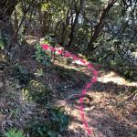 山道は松の葉のが積もっており滑りやすいので注意。