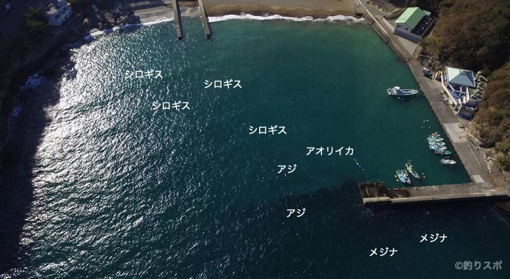 雲見港空撮釣り情報
