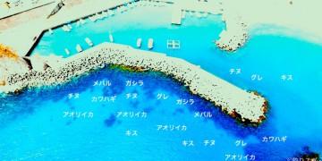 海野港空撮釣り場情報